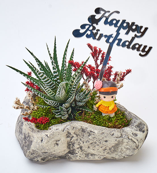 Happy Birthday Serisi Bayan Haworthia Sukulent