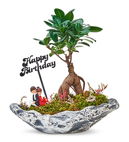 Happy Birthday Serisi Sevgililer Ficus Bonsai