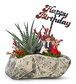 Happy Birthday Sevgililer Haworthia Sukulent